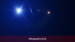 software_ultraflares_flarepack_vol3_prokaryote